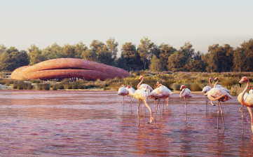 Abu Dhabi Flamingo