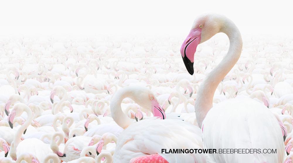 Abu Dhabi Flamingo Observation Tower